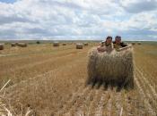 Samen in het veld