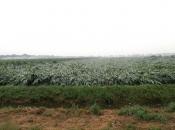 Platgewaaide velden na het noodweer