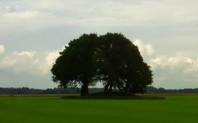 Drouwen – 110 km